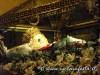 sfortunata2012-baucina-38