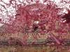 ssebastiano2014-melilli (45)